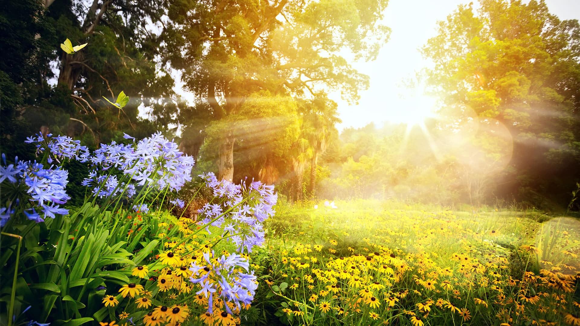 Oechsles 7 Tipps für den Sommergarten
